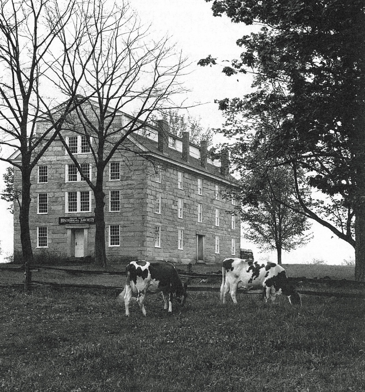 Photograph of cows in front of a large stone building.