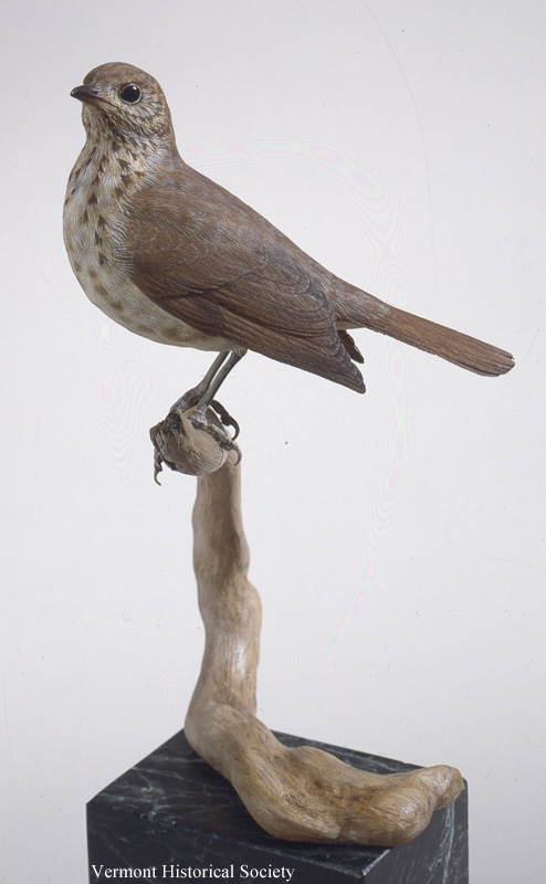 Wooden carving of a hermit thrush.