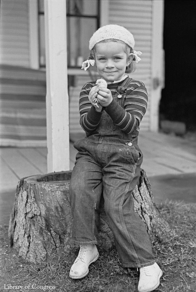 Child holding a chick, Johnson, Vermont, 1937